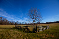The Mercer Oak - Princeton Battlefield
