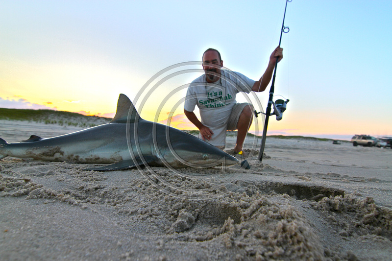 Angry fish gallery sharks surf fishing for Surf fishing for sharks