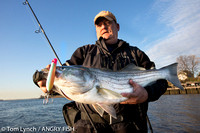STRIPED BASS - Tom Murray (angler)